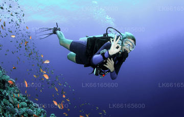 Diving from Mount Lavinia